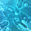【遊戯王 効果考察】《RRーレヴォリューション・ファルコンーエアレイド》考察!【ザ・ヴァリュアブルブック19】