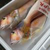 2019年10月31日 小浜漁港 お魚情報