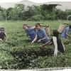 国際青少年連合 感動的な海外ボランティアたちの帰国発表-28