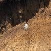 断崖のハヤブサ