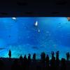 美ら海水族館に安く行く方法|入館料を格安で。。