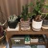《ニトリで買い物》観葉植物用の台(プランタースタンド)を買いました!ニトリはコスパが良い!