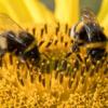 ドローンの未来がミツバチたちにかかっているかも?!