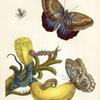 01/13:私の「歴史暦」作業も「動植物の採集か切手コインの蒐集のやうです