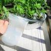 水耕栽培で使う液肥の補充頻度について。夏の旅行には注意です