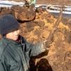 ごぼう掘り。ごぼうの唐揚げは美味い。