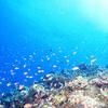 ♪魚影が濃い慶良間ファンダイビング♪〜沖縄ダイビング慶良間〜