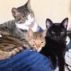 寄り添って仲良く寝る我が家の7匹の猫!