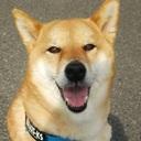 犬と人との幸せ暮らし 〜うちの息子はお犬様〜