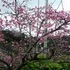 ピンク色~どんな自分もOK~@奄美大島