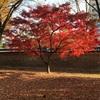 ソウル4大古宮のひとつ「昌慶宮」を散策♪「紅・黄・緑」息をのむほど美しい色の競演に感動する