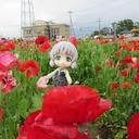 koyoikazeのブログ
