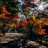 岩屋堂公園に行ってきた(愛知県瀬戸市)
