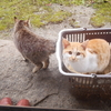 実家に帰省:猫写真 4/1