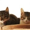 猫との暮らし、家族みんなの同意ある?ハッピー猫ライフの秘訣!