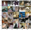PyTorch (9) Transfer Learning (Dogs vs Cats)