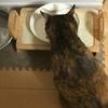【猫】最近のキャットフード事情 実際に人気なキャットフード5選【キャットフード】
