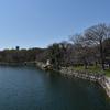大阪城公園 桜の開花状況(2017年4月2日)