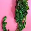 ルッコラのとう立ち。ルッコラのおひたしと菜の花?を食べてみました!