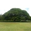 2015 ハワイ旅行 ②この木なんの木(モアナルアガーデン)