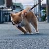 【散歩の主導権争い】〜まっすぐ歩かない犬〜