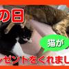 猫から母の日のプレゼントを貰いました。とある日曜日の猫たち。I got a gift for Mother's Day from a cat.
