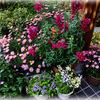 わが家の花たち 〜赤い花〜