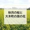 【福岡】🌸秋月花見ツーリングと菜の花❀