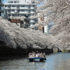 3月31日(日)発   優雅なひと時と美食を楽しむ 憧れの「ホテル椿山荘東京」と目黒川クルーズ、東京・鎌倉さくら紀行