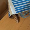 猫ハゲる ⑮ ~かゆみ止め薬の服用後~