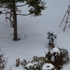 雪不足と運動不足