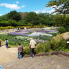 奈良・馬見丘陵公園の菖蒲&紫陽花