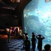 水族館での撮影方法(の自分用メモ)