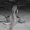 深すぎる訳があって爬虫類は絶対触れない