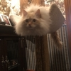 版画展:猫の芸術