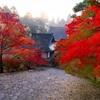 京都・高雄 - 霧に包まれる紅葉の神護寺