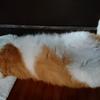 猫ちゃーの 開き一丁