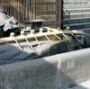 艮神社の亀