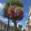 ロンドンの道に設置されている花