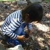 5月22日 辰巳の森緑道公園