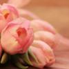 「花」と「華」の違い
