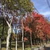 農試公園 IN SAPPORO 2018 autumn