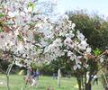 桜の穴場スポット!牧野ヶ池緑地の桜を堪能してきました【名古屋・名東区】