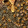 知って納得!ハチミツの栄養は体に良い