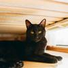 カメラ嫌いの黒猫こんぶ