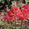 鹿沼公園の秋の花!(9月19日)
