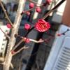 🌸🌸ウメ開花🌸🌸