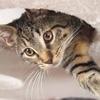 Cat - チビのご飯