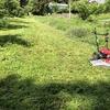 先週末も草刈りばっかりだったけど、ソラマメ穫れました