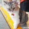 【ボス猫】ある日偶然に出会ったボス猫と私。友達になりたい~!